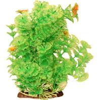 Poppy Pet - Bushy Ambulia Aquarium Plant - Green - 12  Inch