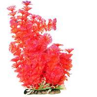 Poppy Pet - Bushy Ambuila Aquarium Plant - Red - 12  Inch