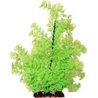 Poppy Pet - Bushy Ambuila Aquarium Plant - Lime Green - 16 Inch