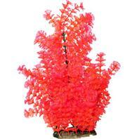 Poppy Pet - Bushy Ambuila Aquarium Plant - Red - 16 Inch