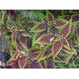 Dewitt Company - Bird And Pond Netting - Black - 14X45